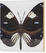 Butterfly Species Euploea Radamanthus Common Name Magpie Crow Wood Print