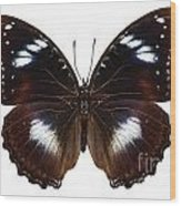 Butterfly Species Hypolimnas Bolina  Wood Print