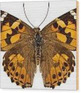 Butterfly Species Vanessa Cardui  Wood Print