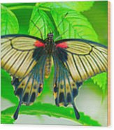Butterfly Study #0064 Wood Print by Floyd Menezes