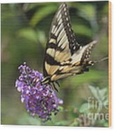 Butterfly Sucking On Some Pollen Wood Print