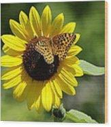 Butterfly Sunflower Wood Print