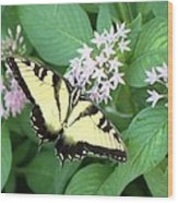 Butterfly - Swallowtail Wood Print