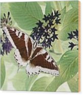 Butterfly - Swallowtail - Photopower 140 Wood Print