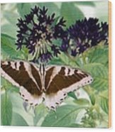 Butterfly - Swallowtail - Photopower 141 Wood Print