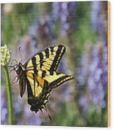 Butterfly Thoughts Wood Print