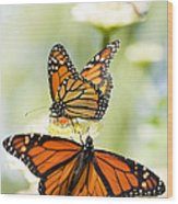 Butterfly Trio Wood Print