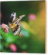 Butterfly Two Wood Print