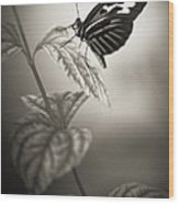 Butterfly Warm Black And White Wood Print
