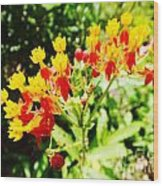Butterfly Weed 2 Wood Print