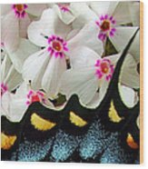 Butterfly Wing And Phlox Wood Print