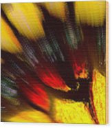 Butterfly Wing Pastel Wood Print