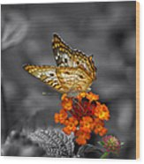Butterfly Wings Of Sun Light Selective Coloring Black And White Digital Art Wood Print