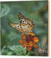 Butterfly Wings Of Sun Light Wood Print