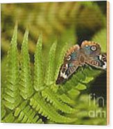 Butterfly With Eyes  Wood Print