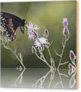 Butterfly With Reflection Wood Print