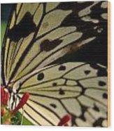 Butterfly World Wood Print