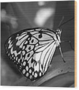 Butterfly7 Wood Print