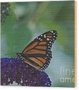 Butterflybush Wood Print