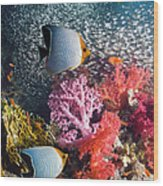 Butterflyfish Over Coral Reef Wood Print