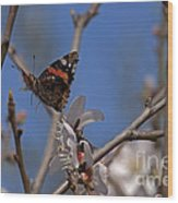 Butterfy In Almond Blossoms   #9289 Wood Print