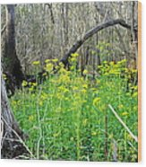 Butterweed Florida Wildflower Wood Print