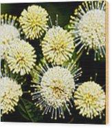 Buttonbush Wood Print
