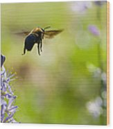 Buzz Off Wood Print by Annette Hugen
