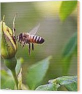 Buzz The Bee Wood Print