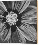 Bw Flower Art Wood Print by Tammy Smith
