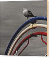 Bw Gull On Rwb Wood Print