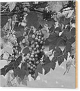 Bw Hanging Thompson Grapes Sultana Poster Look Wood Print