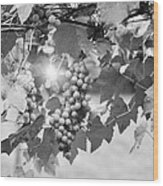 Bw Lens Flare Hanging Thompson Grapes Sultana Wood Print