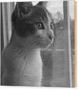 Bw The Inquisitive Kitty Jackson Wood Print
