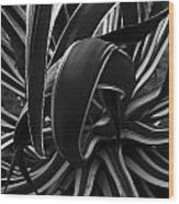 Bw Variegated Agave Wood Print