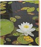 Bwca Water Lily Wood Print