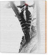 Bw.woodpecker1 Wood Print
