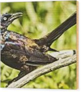 By Beak And Tail It Is A Grackle Wood Print