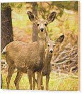 By Mama's Side - Photo Manipulation - Mule Deer - Casper Mountain - Casper Wyoming Wood Print