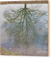 C And O Canal Tree Reflection Wood Print