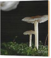 C Ribet Mushroom And Fungi Art Pearl Wood Print by C Ribet