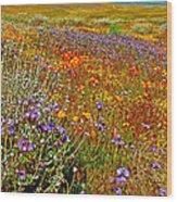 Ca Poppies And Goldfields And Lacy Phacelia And Sage In Antelope Valley Ca Poppy Reserve-california Wood Print