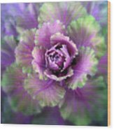 Cabbage Flower Wood Print