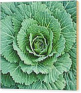 Cabbage Leaves Wood Print