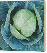 Cabbage Painterly Wood Print