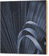 Cabbage Palm No. 3 Wood Print