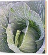 Cabbage Still Life Wood Print
