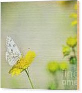 Cabbage White Butterfly Wood Print