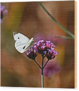Cabbage White Butterfly In Fall Wood Print
