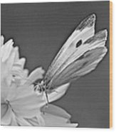 Cabbage White Butterfly On Cosmos - Black And White Wood Print